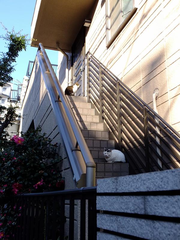 民家階段の猫たち3