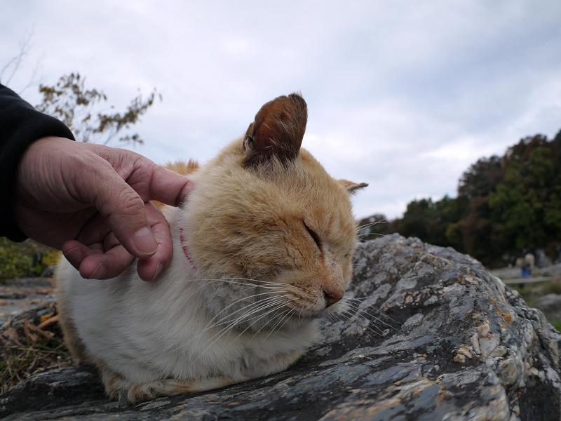 川原岩の茶白猫3