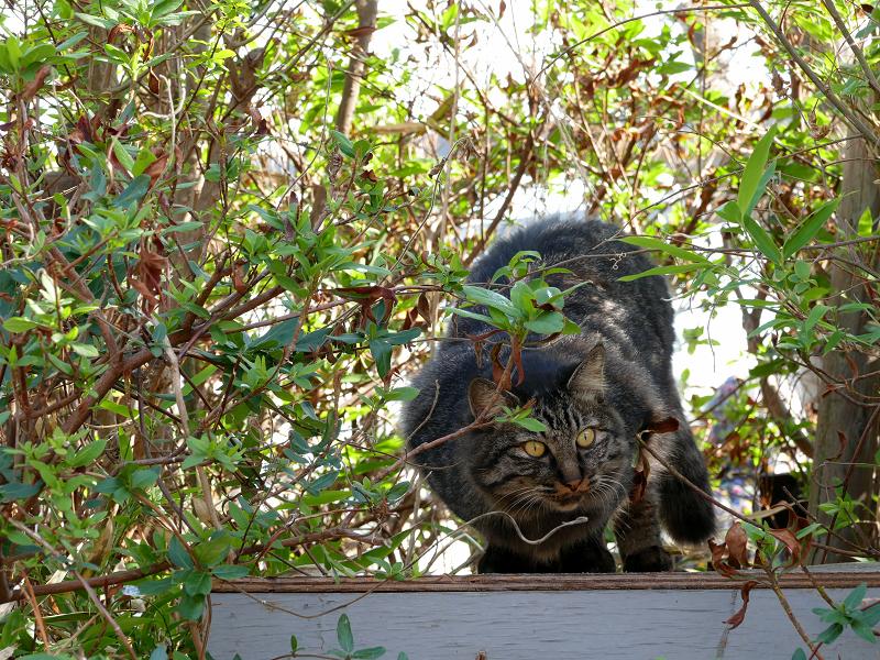 茂みから出て来た毛が長い猫1