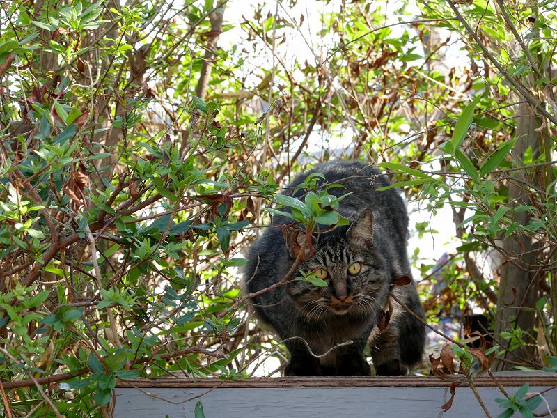 茂みから出て来た毛が長い猫2