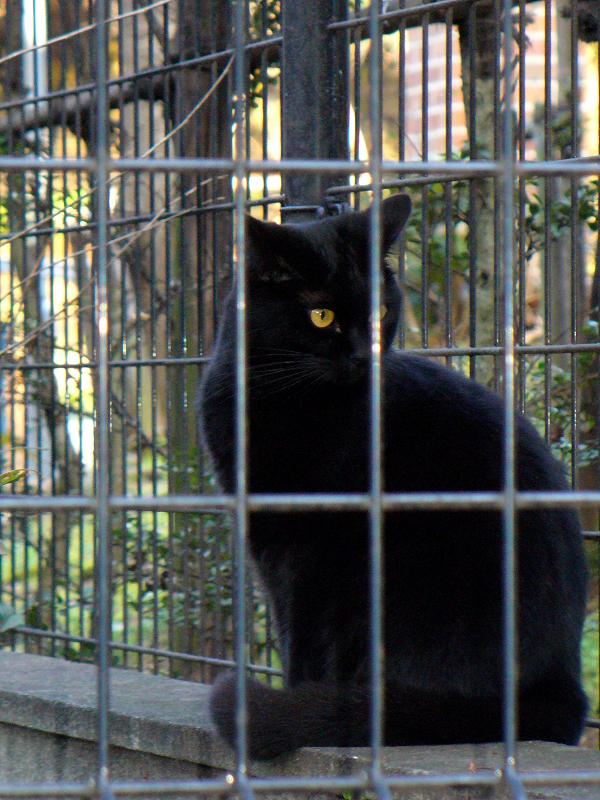 金網越しの黒猫1