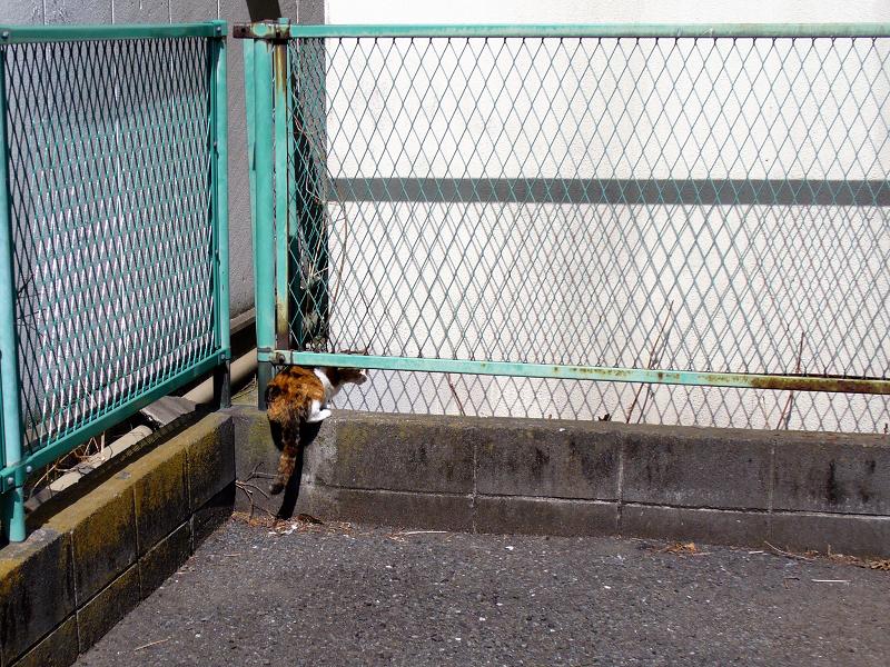駐車場の隅っこの三毛猫2