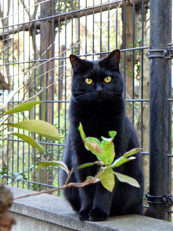 金網越しの黒猫2