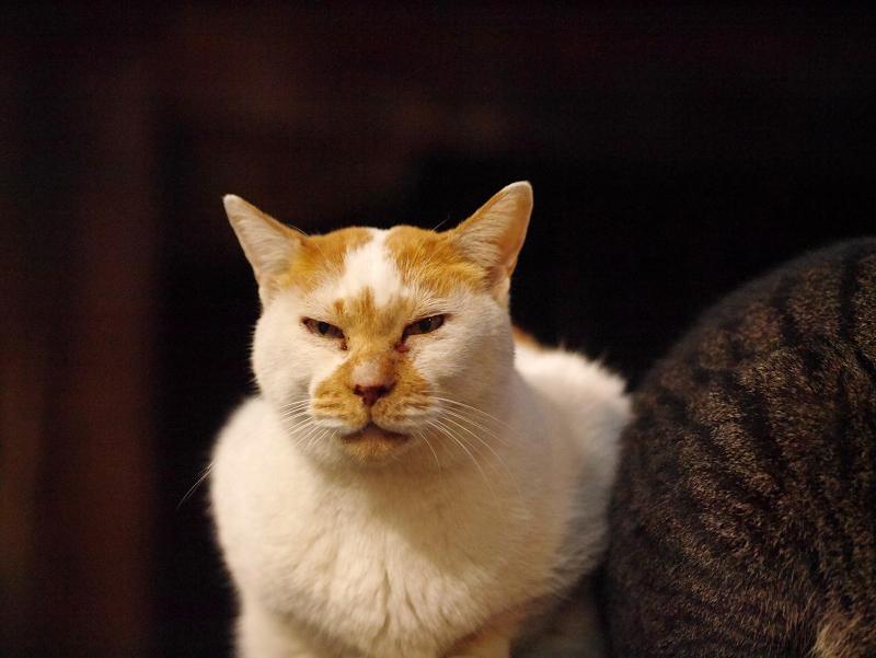 ベンチの上の白茶猫