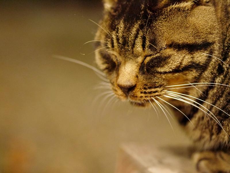 ベンチの上のキジトラ猫
