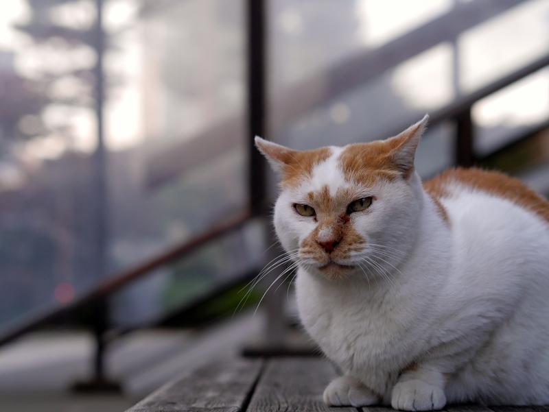 ベンチで待つ茶白猫2