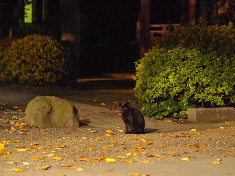 暗闇境内の黒猫