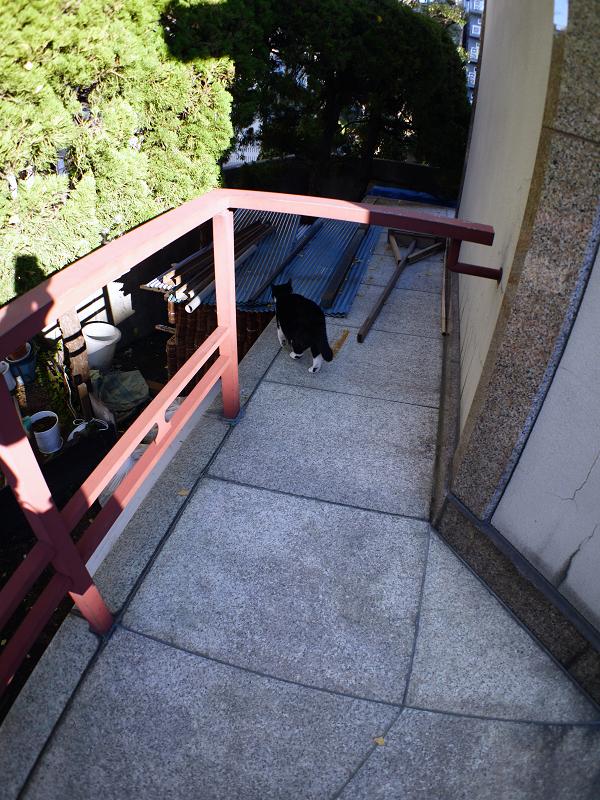 陽射しを探す黒白猫1