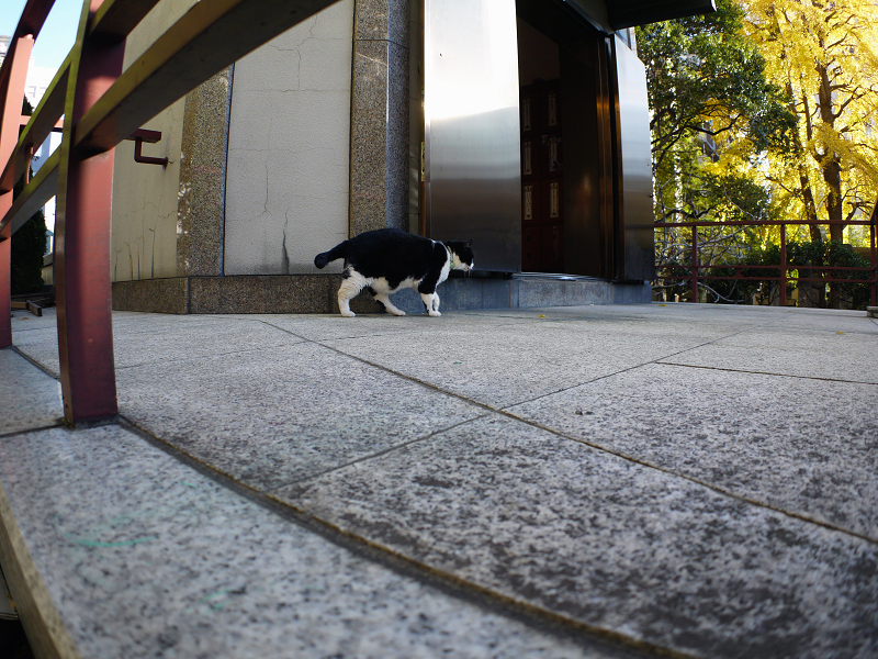 陽射しを探す黒白猫2