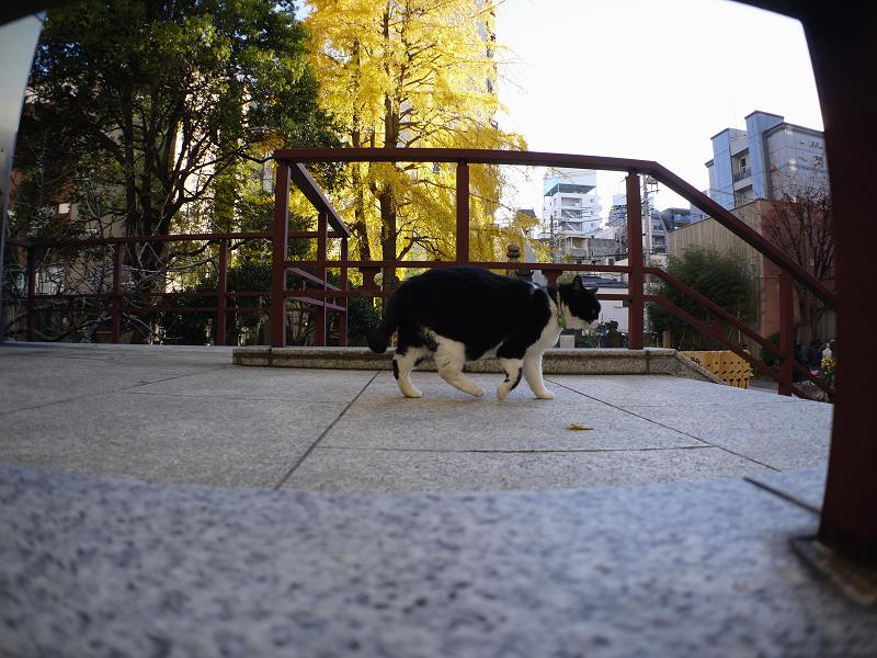 陽射しを探す黒白猫3