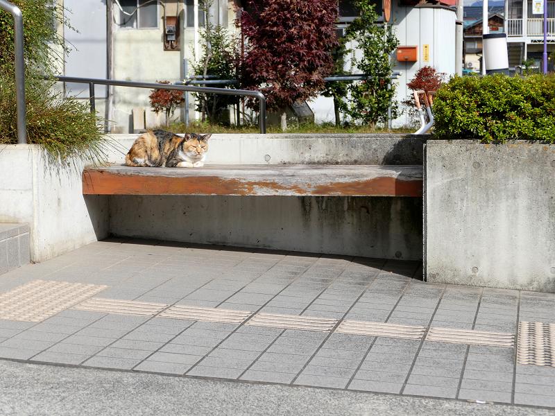 施設前のベンチと三毛猫1