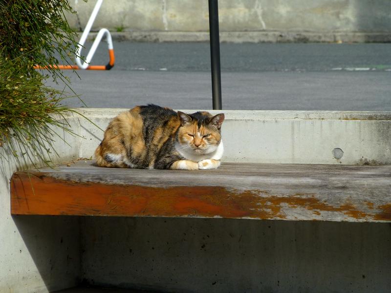施設前のベンチと三毛猫2