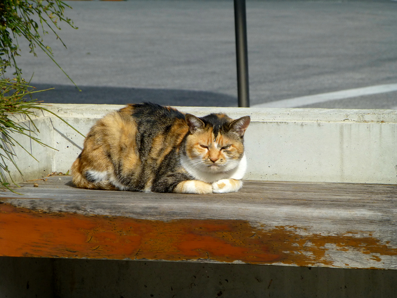 施設前のベンチと三毛猫3