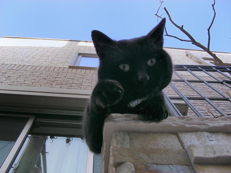 門柱から猫パンチする黒猫1