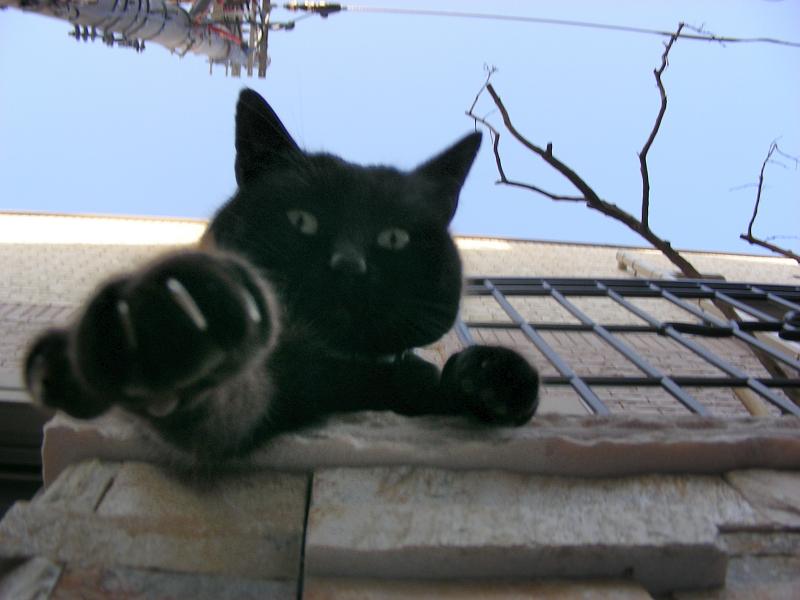 門柱から猫パンチする黒猫2