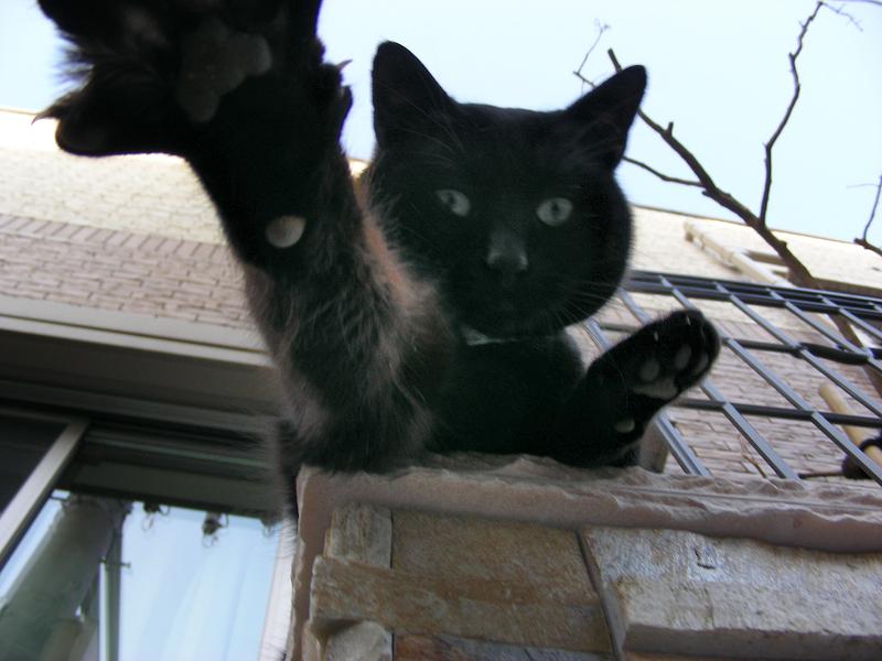 門柱から猫パンチする黒猫3