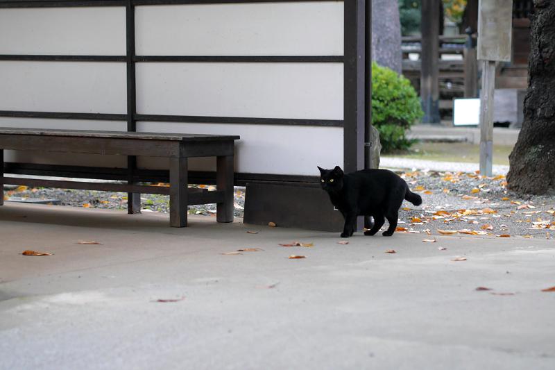 通路の黒猫1