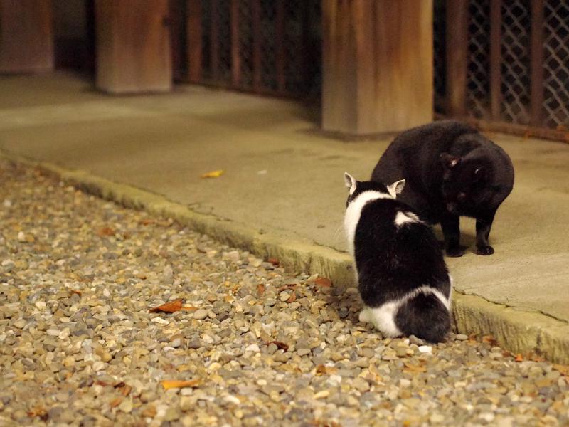 夜の境内で睨み合ってる猫たち2