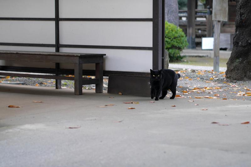 通路の黒猫2