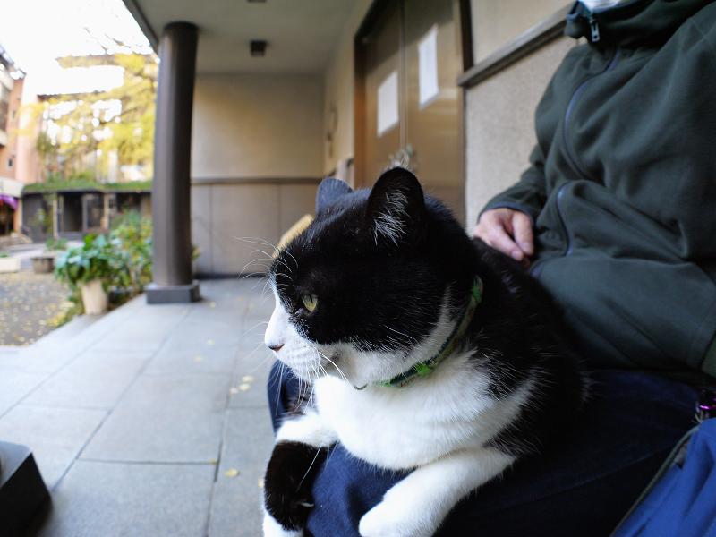 膝で寛いじゃってる黒白猫1