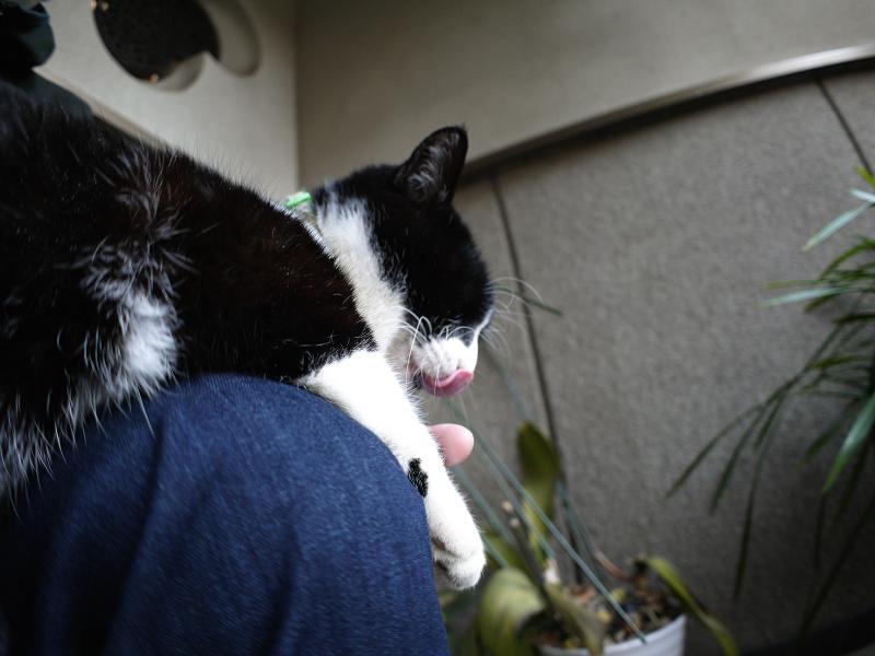 膝で寛いじゃってる黒白猫2