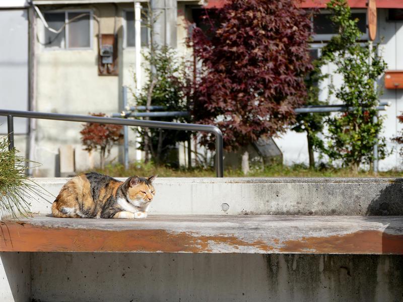 日当たりの良いベンチの三毛猫1