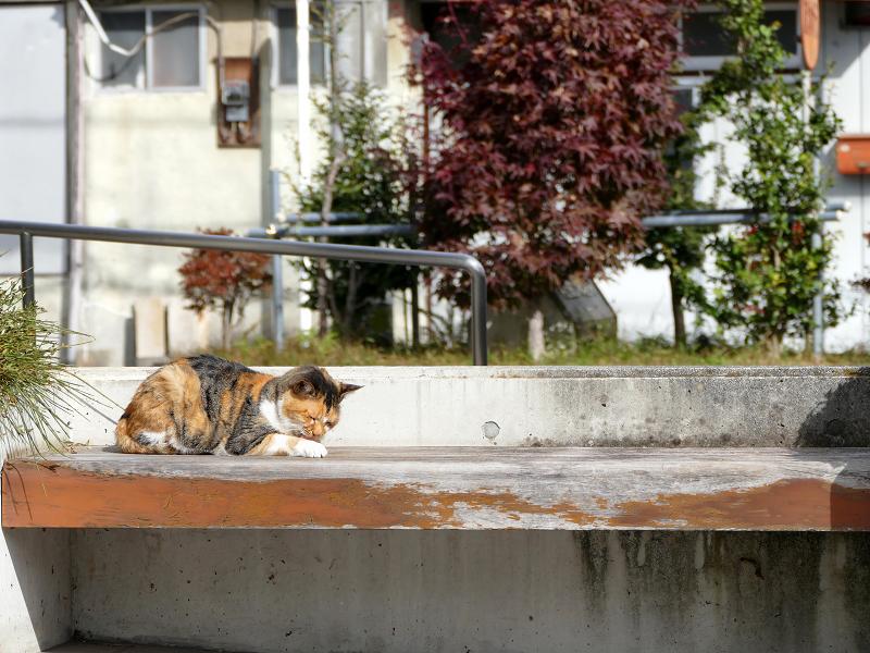 日当たりの良いベンチの三毛猫2
