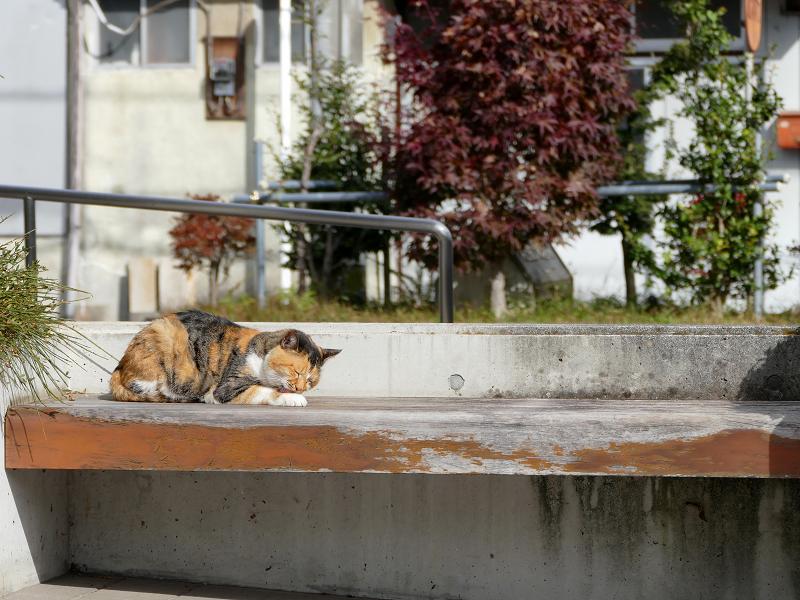 日当たりの良いベンチの三毛猫3