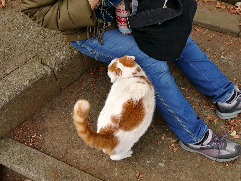 尻尾を立てて歓迎の白茶猫3