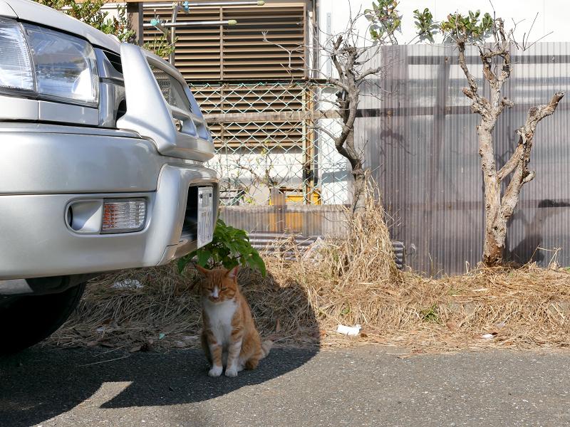迷ってる茶白猫2