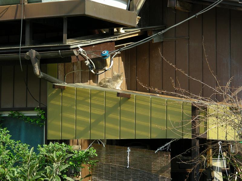 屋根の上の猫たち1