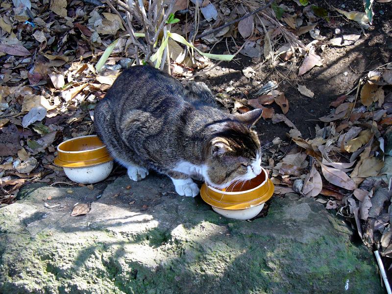 釜飯の器とキジ白猫1