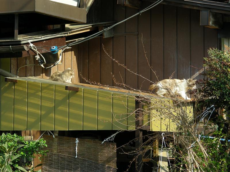 屋根の上の猫たち2
