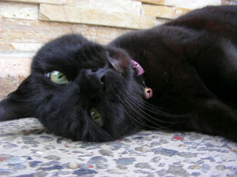 近所の方が連れてきた黒猫4