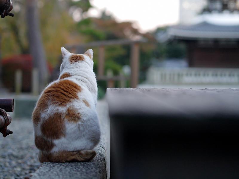 待つ猫の姿1