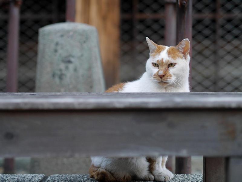 待つ猫の姿2