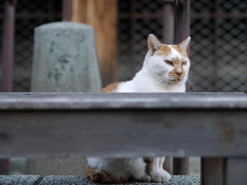 待つ猫の姿3