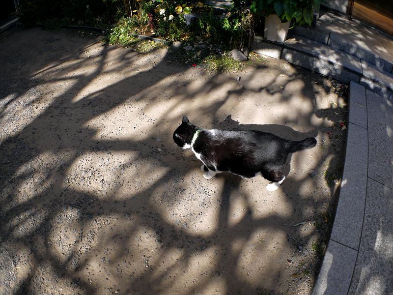 光と影と黒白の猫1