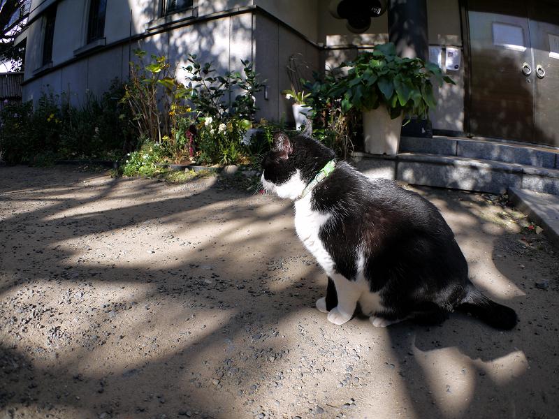 光と影と黒白の猫2