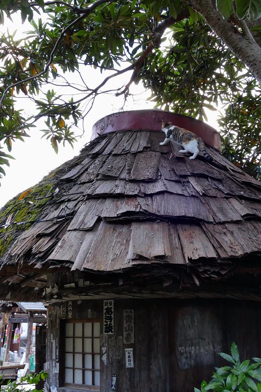 檜皮の屋根の乗ってる三毛猫1