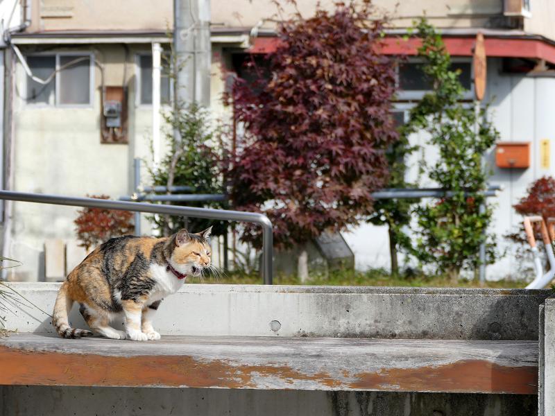 日当たりの良いベンチで毛繕い中の三毛猫1