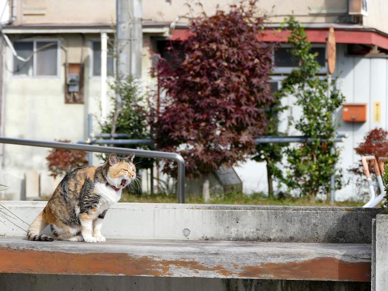 日当たりの良いベンチで毛繕い中の三毛猫2