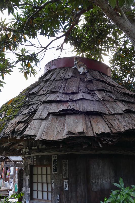 檜皮の屋根の乗ってる三毛猫3