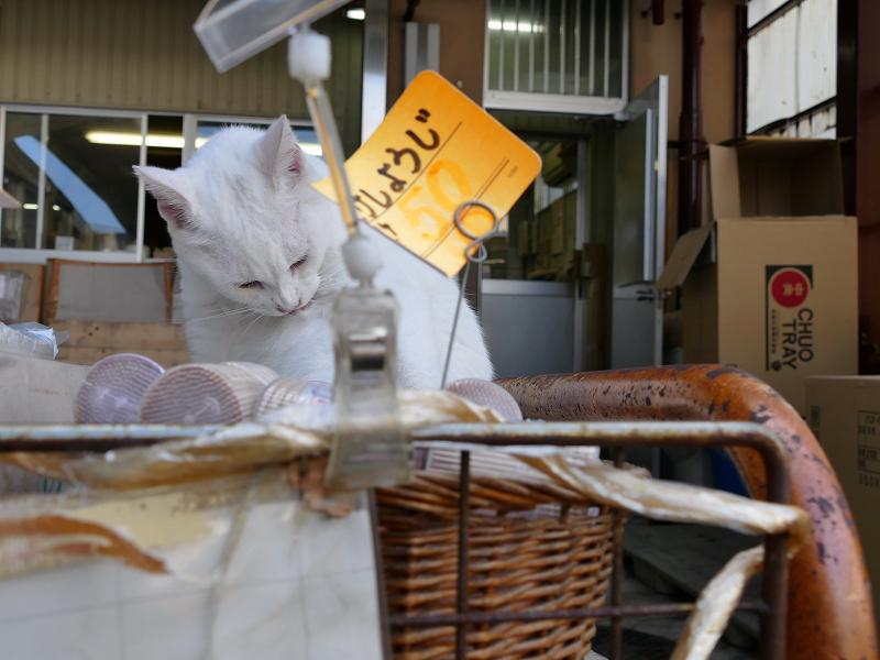 商品棚の白猫1