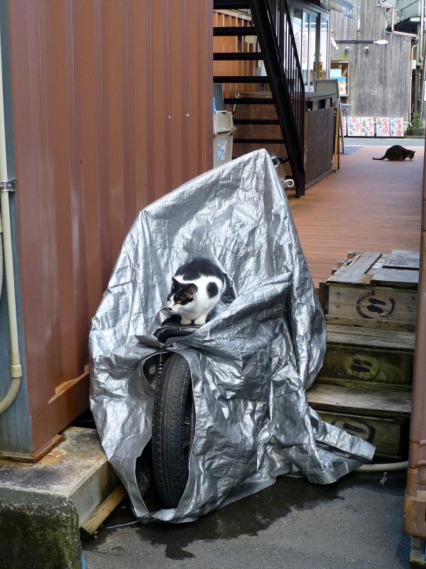 バイクのシートに座ってる黒白猫1