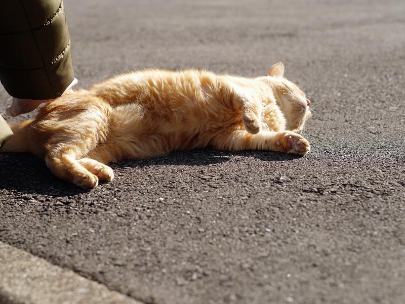 触られて横になってる茶トラ猫2