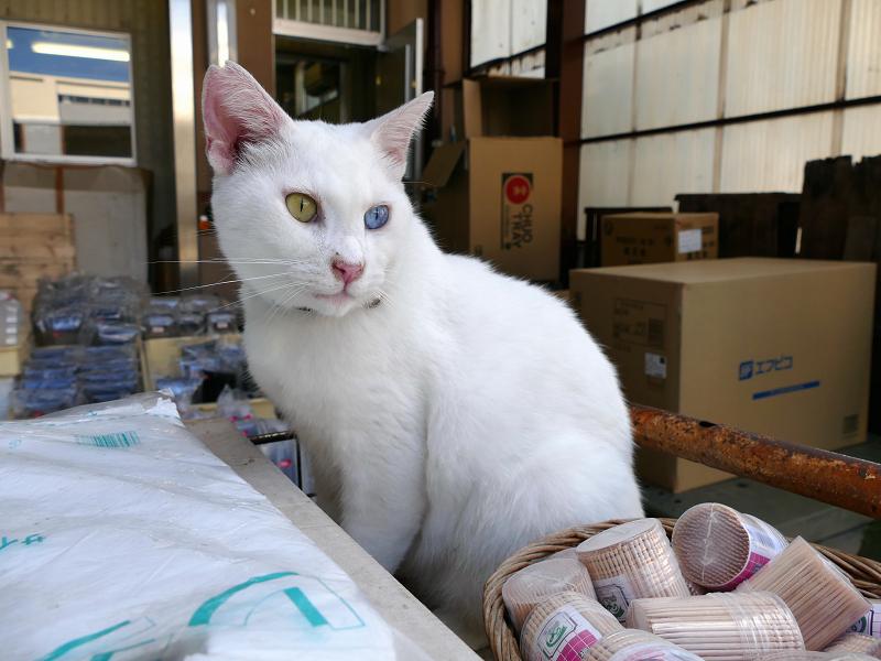 商品棚の白猫2