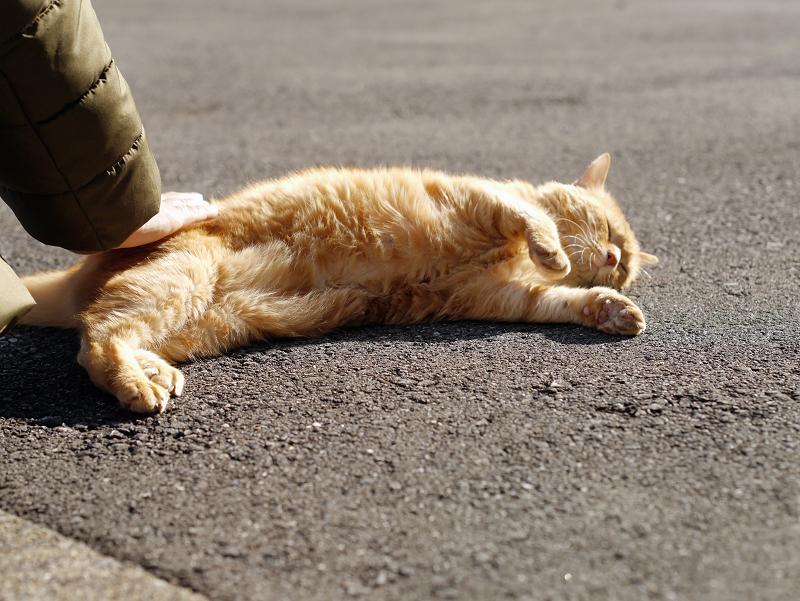 触られて横になってる茶トラ猫3