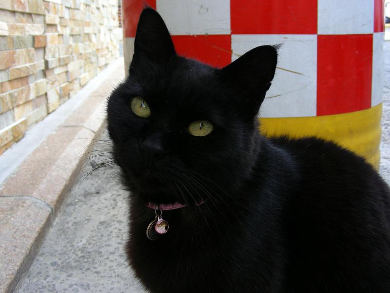 上を見上げる黒猫1