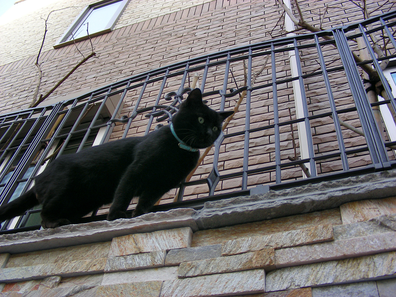 上から見下ろす黒猫